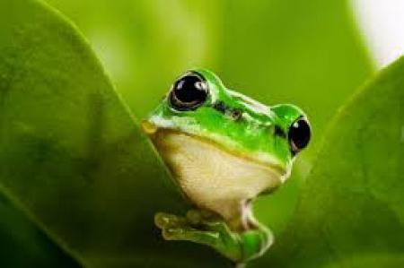 Była sobie żabka mała...